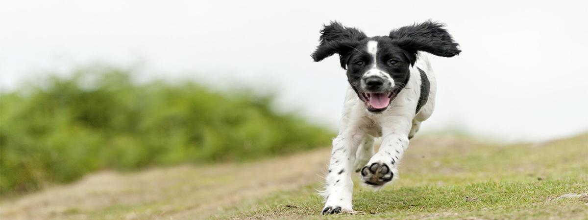 Fysiotherapie bij honden