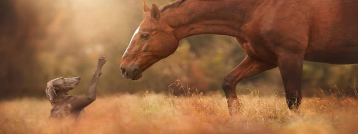 Fysiotherapie bij paarden