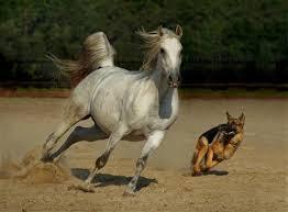 paard en hond 2